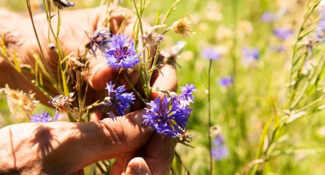 Bee The Future: il fiordaliso