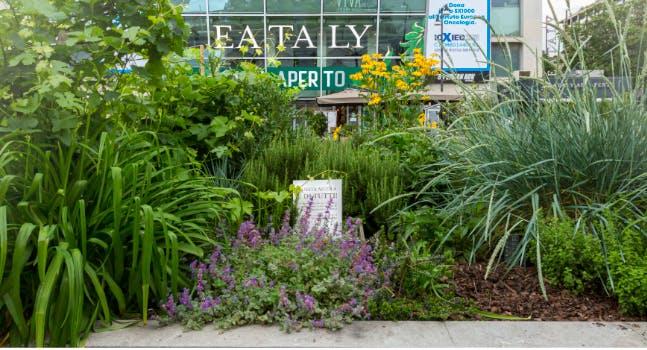 Eataly all'aperto - Milano Smeraldo