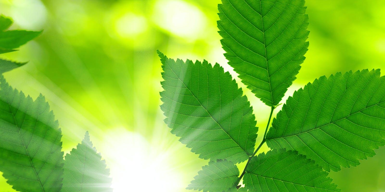 EDROP Engineering AG Stimmungsbild Blätter grün