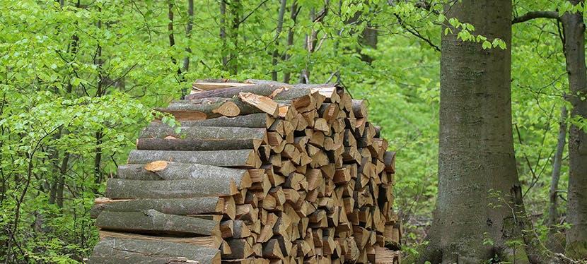 Un tas de bois entreposé dans la forêt