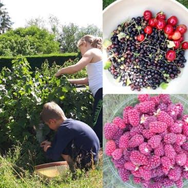 Photo des enfants de la Geeener Family en pleine cueillette de fruits dans le jardin familial