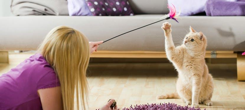 Chat qui joue avec sa maitresse