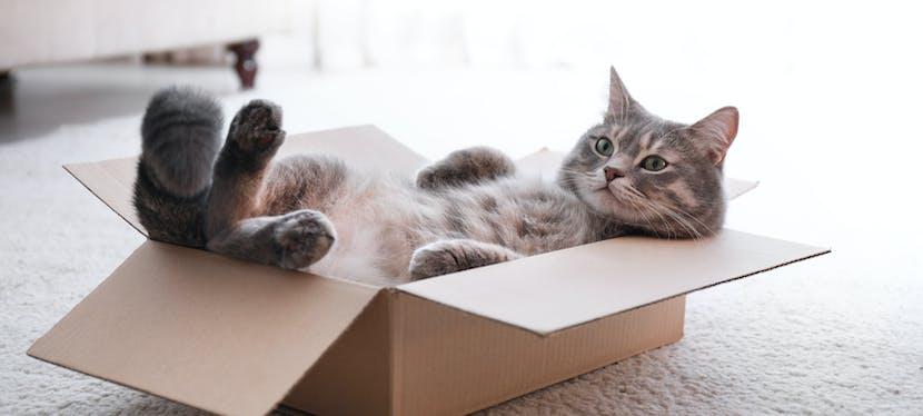 Demenagement chat : un chat qui se cache dans les cartons