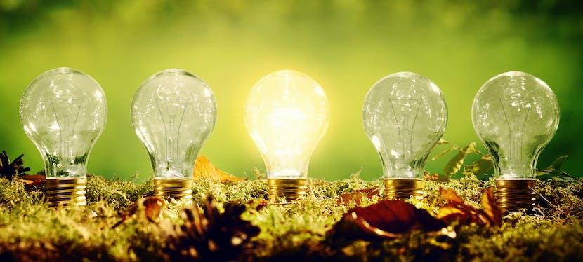 Des ampoules plantées dans le sol pour représenter les producteurs locaux d'énergie