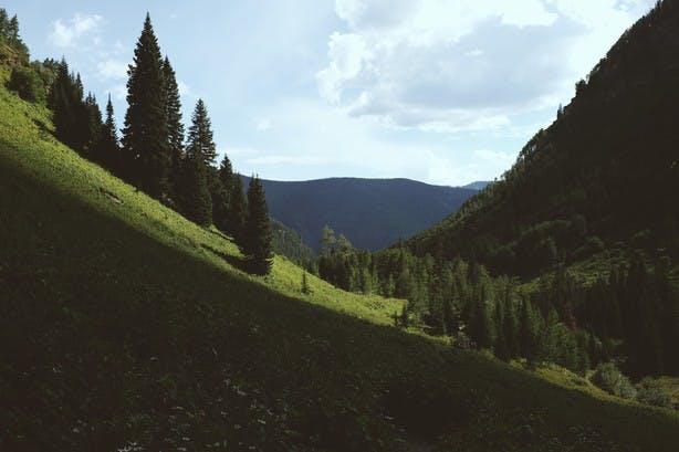paysage de foret en montagne