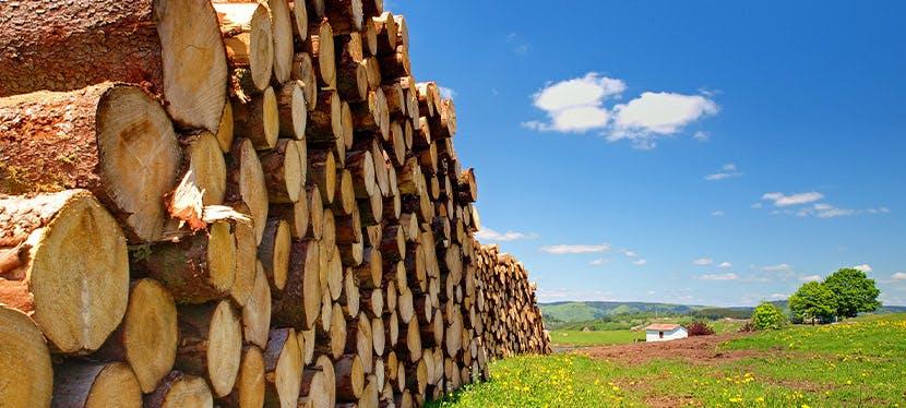 Du bois de chauffage livré chez vous sous forme de bûche