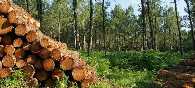Faites-vous livrer des bûches de bois directement chez vous