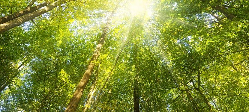 Une belle forêt verte avec du soleil