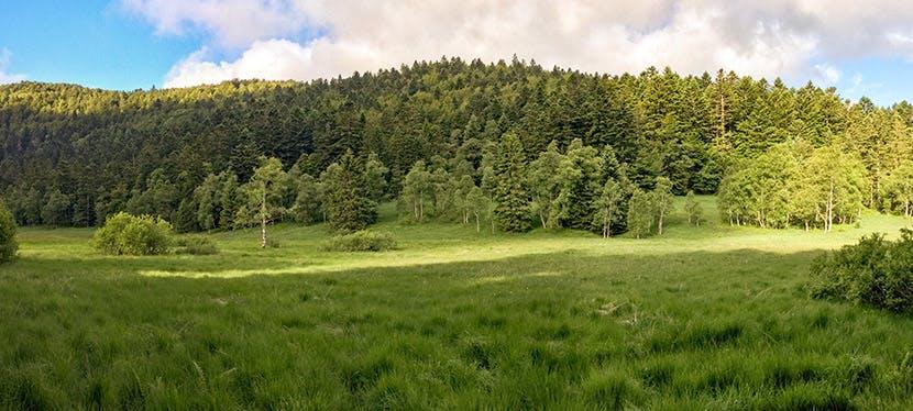 Ces forêts boisées devrait recouvrir un bon tiers-ouest de la France pour compenser nos émissions de CO2