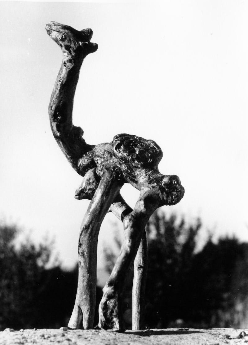 Rădăcină de copac sub forma unei cămile