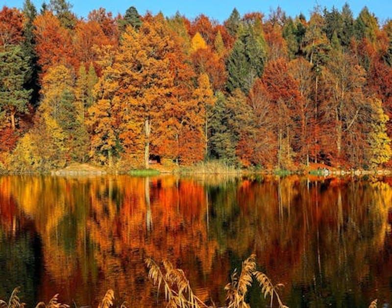 trees and a lake