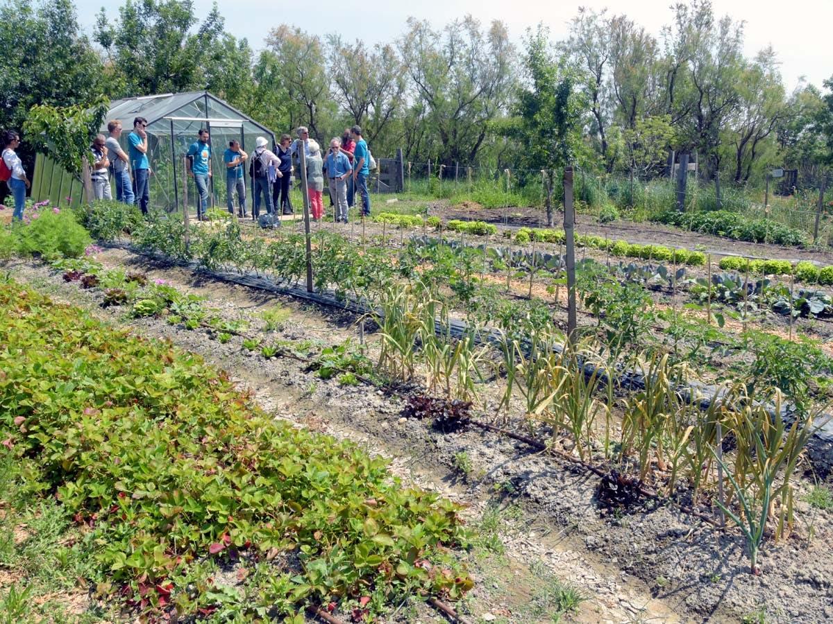 Enercoop Provence-Alpes-Côte d'Azur PACA - Rencontre coopérative - Marais du Vigueirat Camargue - Jardins Potagers