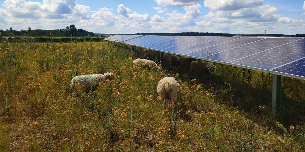 Moutons sur le parc de Lassicourt dans l'Aube (10) - Valorem - Enercoop Nouvelle-Aquitaine