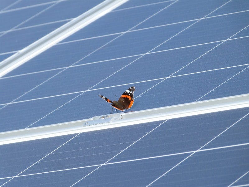 papillon sur panneau solaire