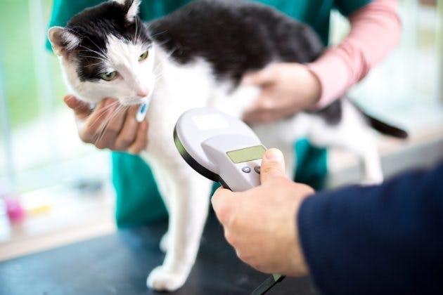 Microchip per animali domestici: tutte le informazioni da conoscere