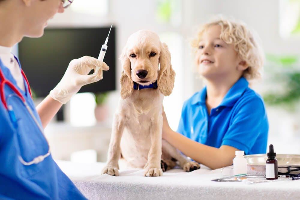 Vaccini per cani: rivolgersi al veterinario a domicilio