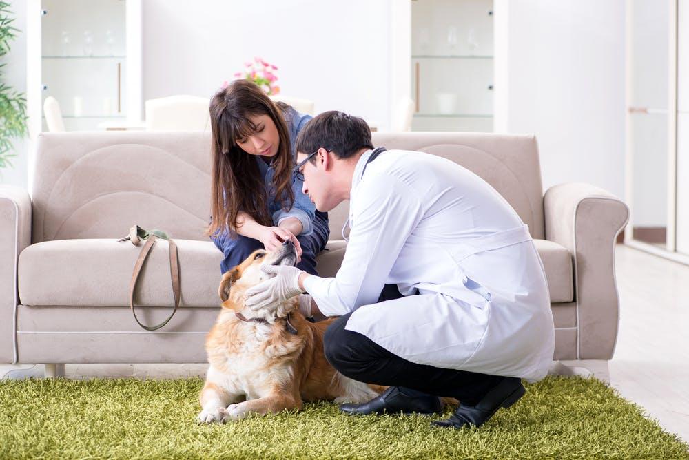 Dermatite nel cane? Chiedi al veterinario a domicilio