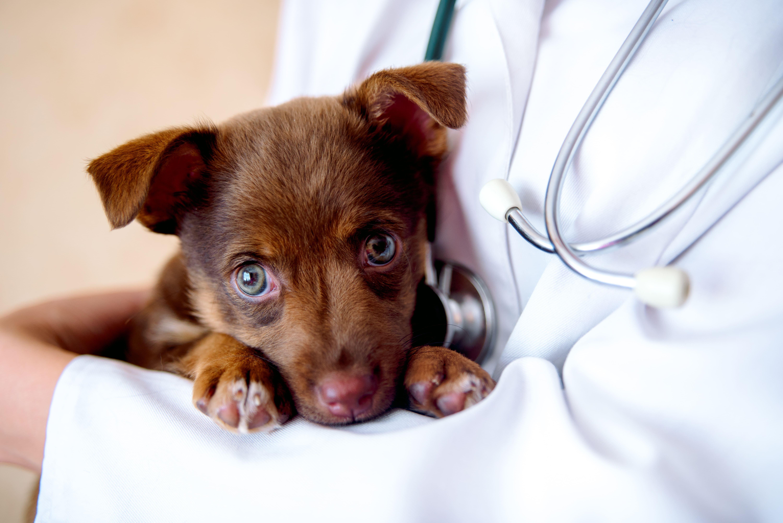 Veterinario a domicilio per cuccioli: la prima visita