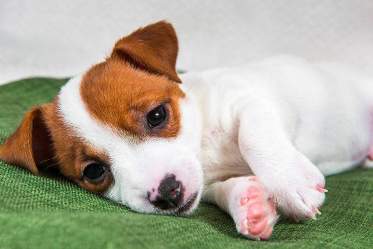Sintomi di avvelenamento nel cane: come riconoscerli e quando chiamare il veterinario