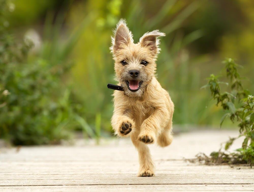 Come educare il cucciolo di cane? Ecco qualche consiglio utile.