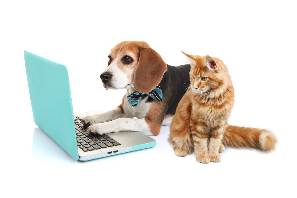 Consulto veterinario online