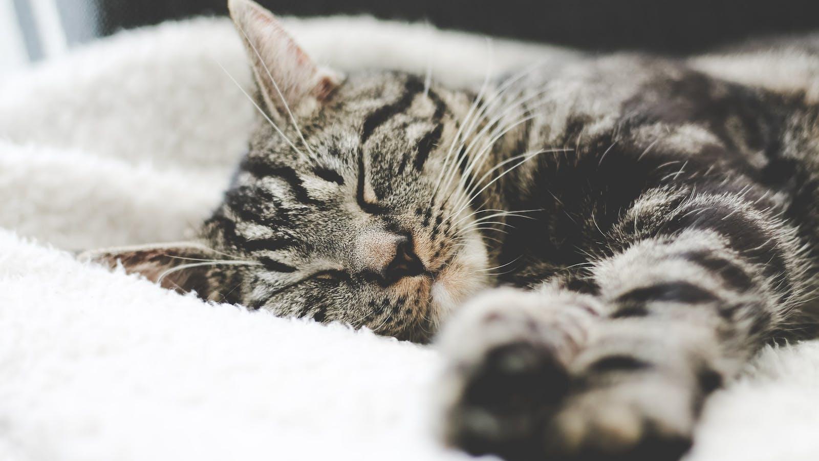 Photo d'un chat en train de dormir