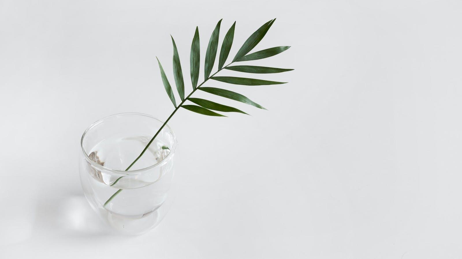Tige d'une plante verte dans un vase transparent