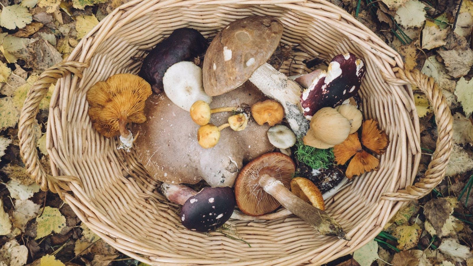 Panier rempli de champignons en couleurs