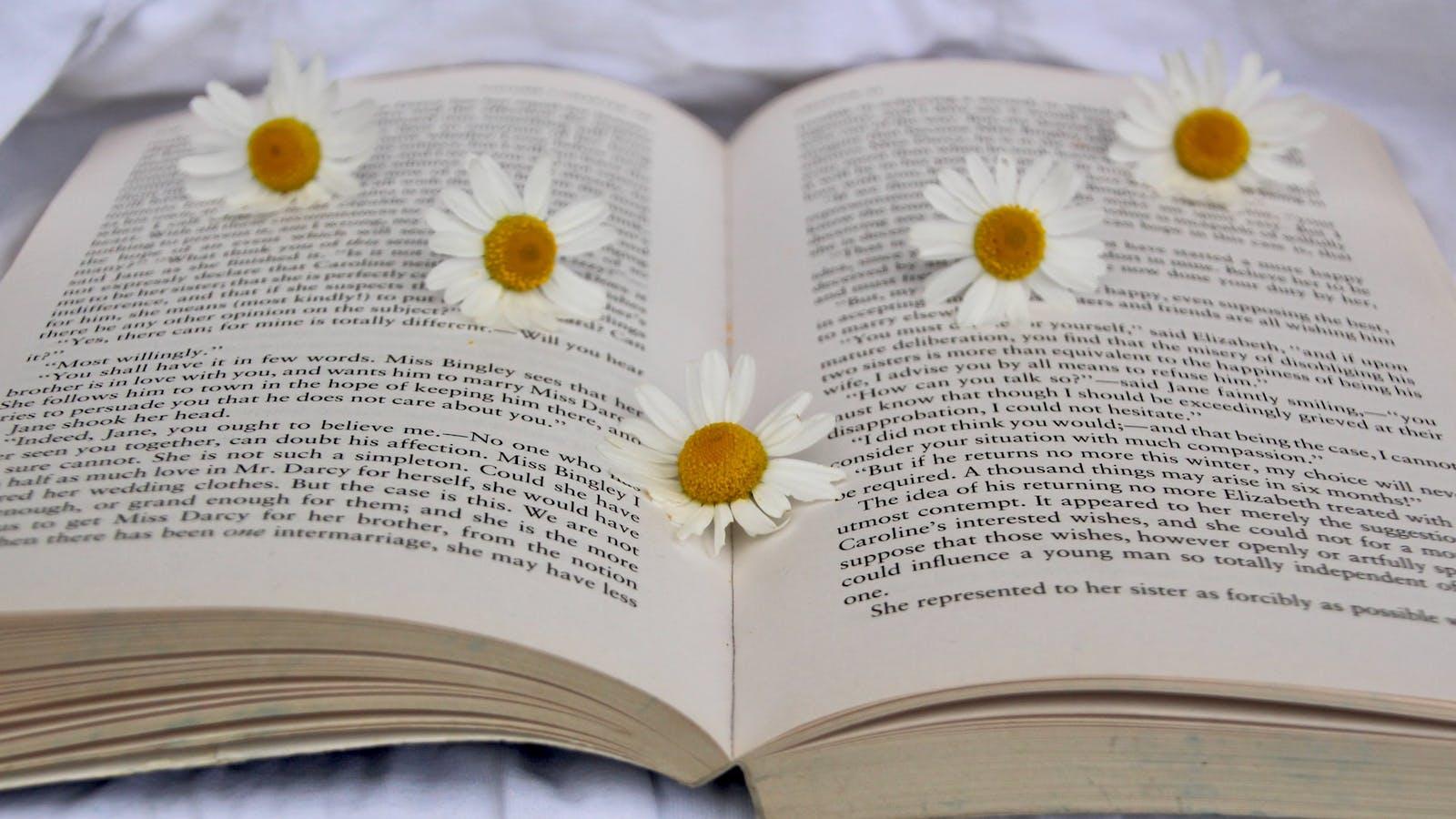 Fleurs de camomille posées sur un livre ouvert