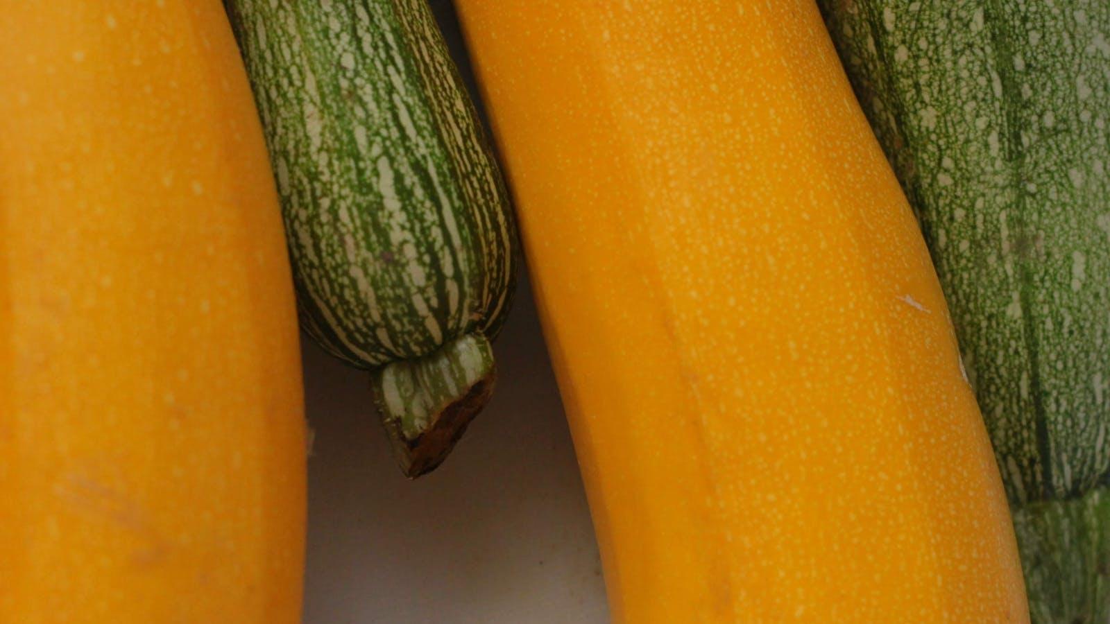 Courgette vert clair et jaune
