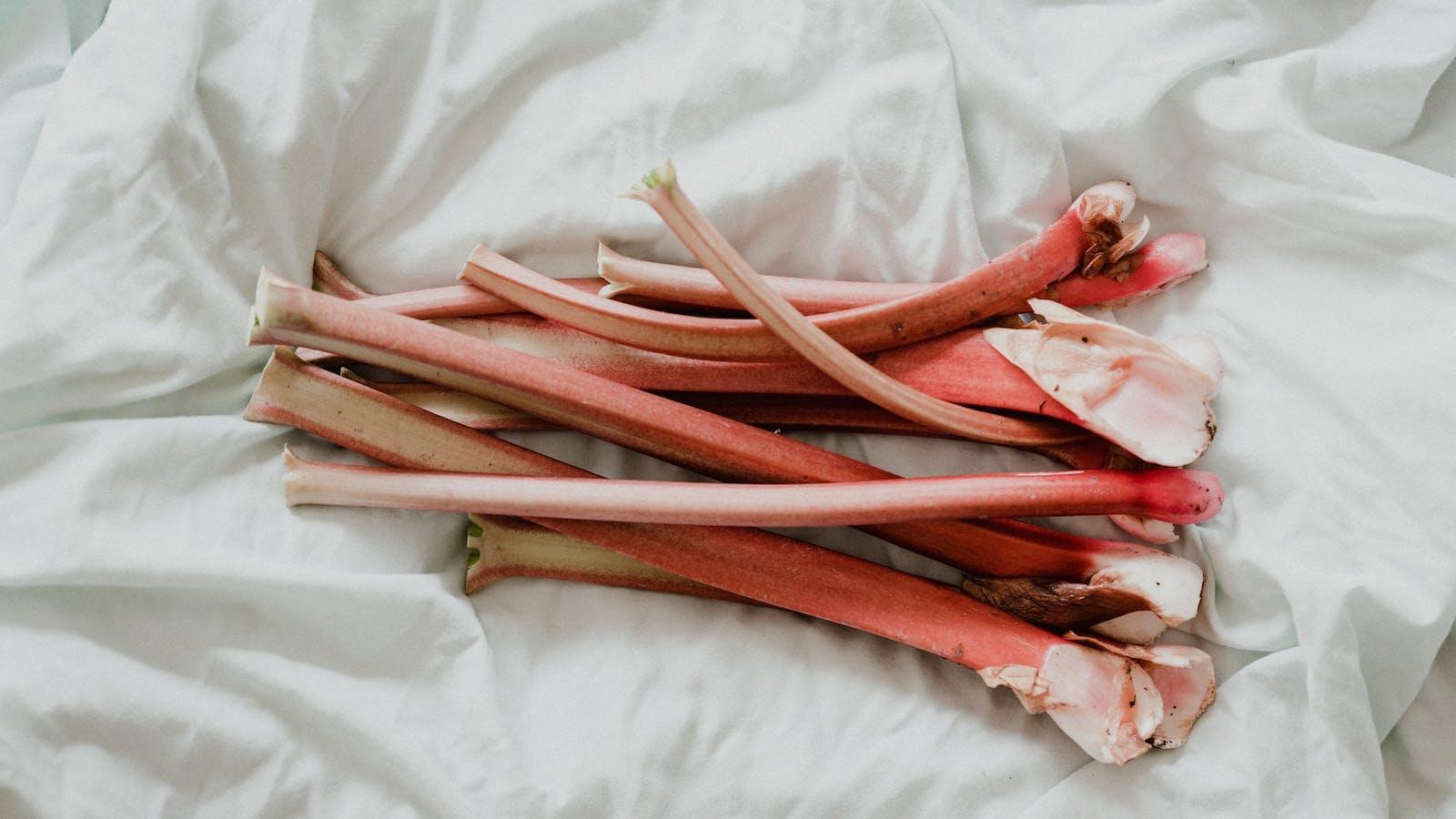 Plant de rhubarbe