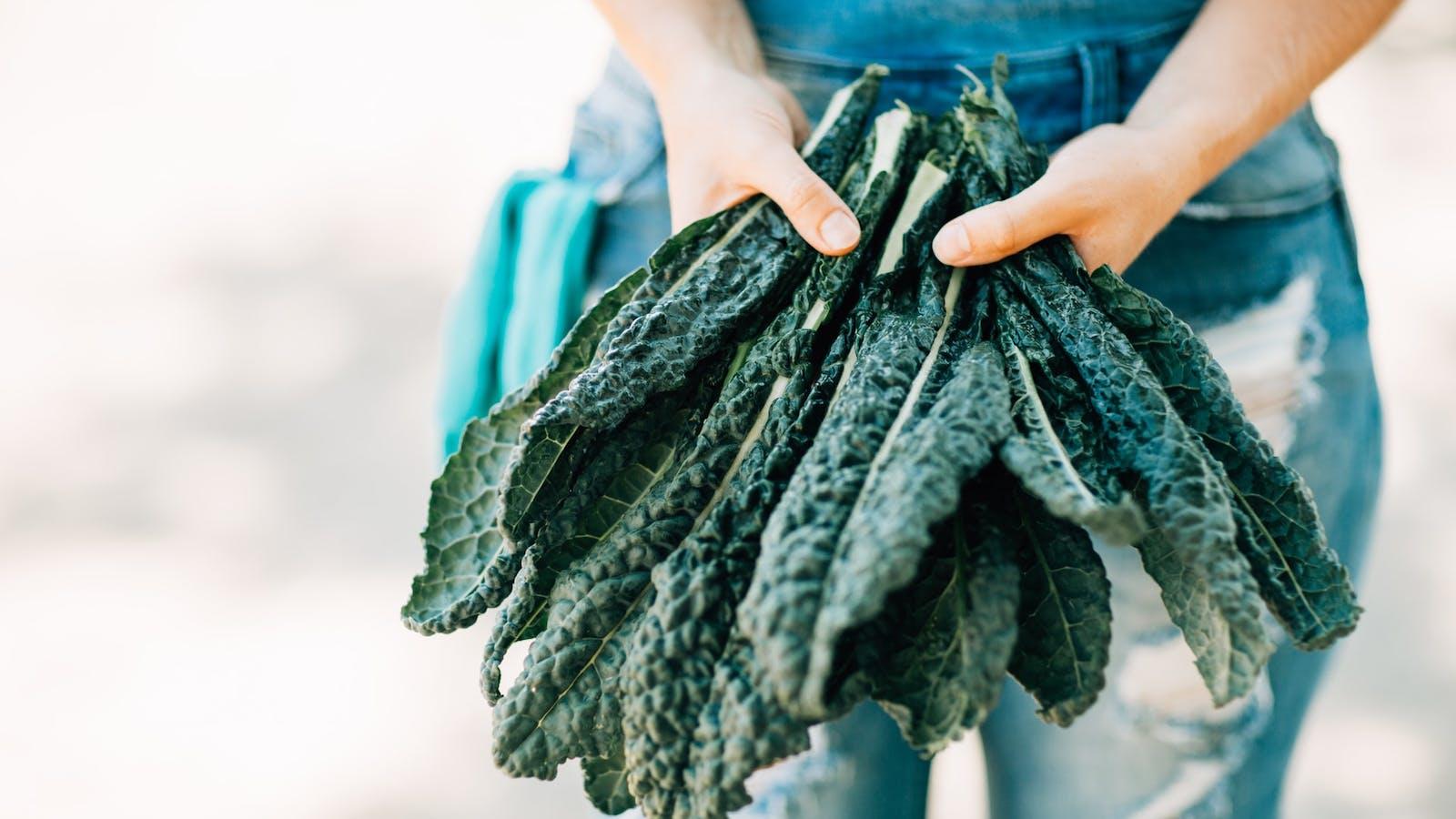 Bras tendus présentant des feuilles de chou kâle