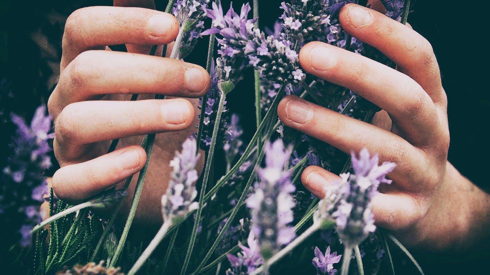 plantes violettes