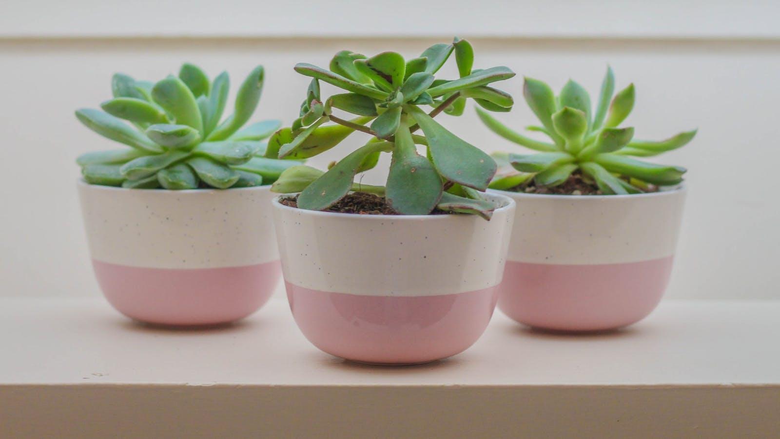 Photo de 3 plantes en pots en couleurs