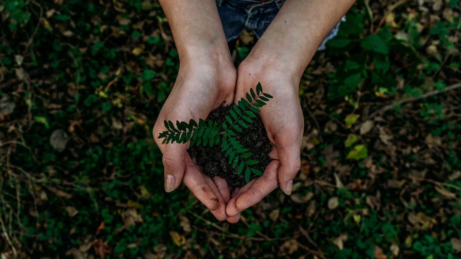 plante verte dans une main
