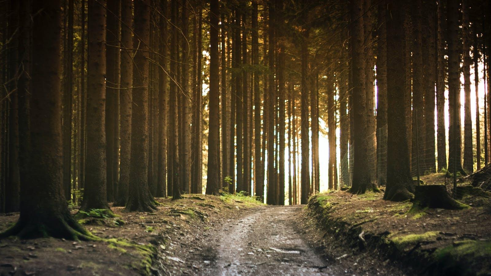 Photo d'un paysage dans les bois