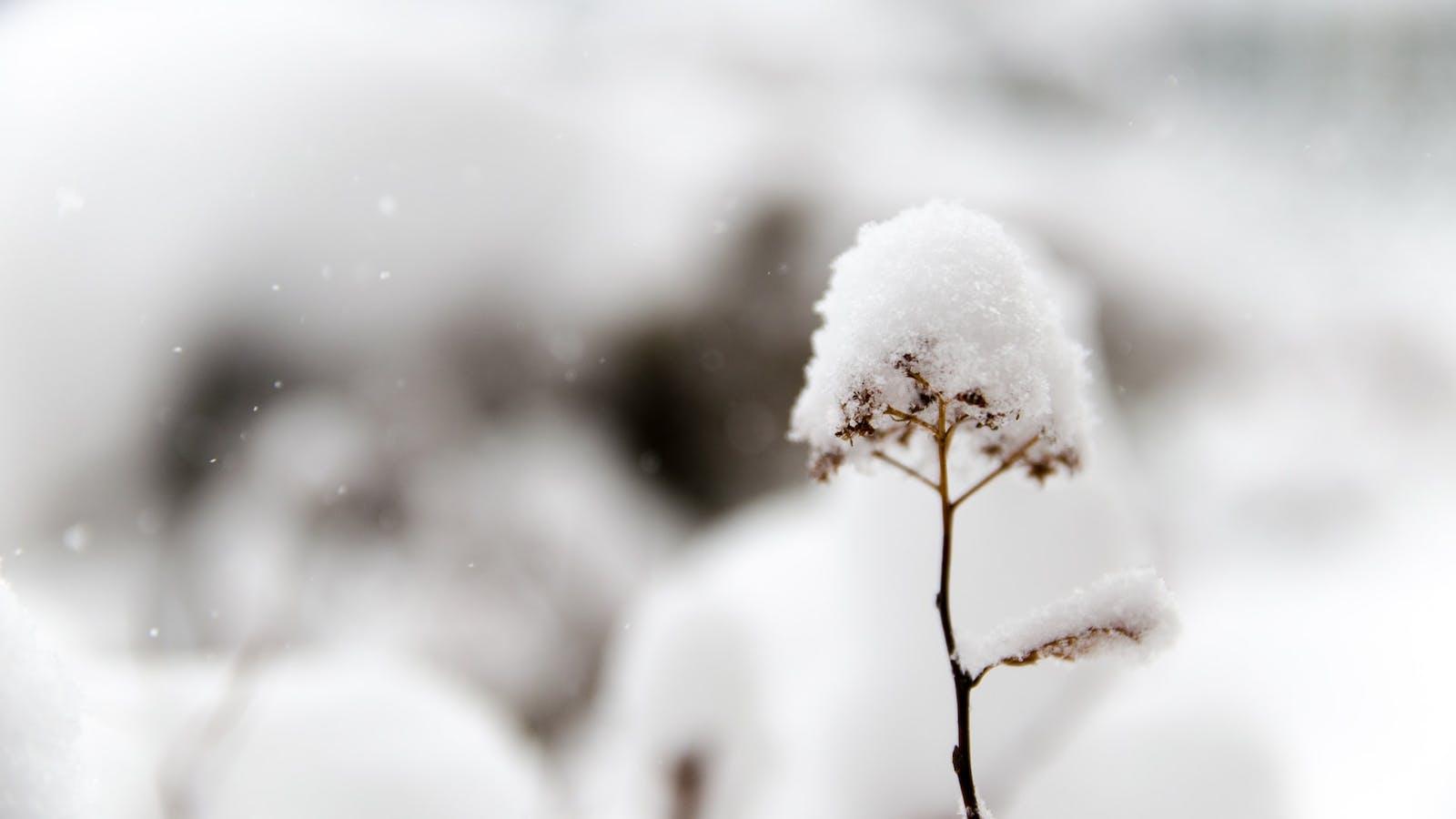 Tige d'arbre surmontée de neige