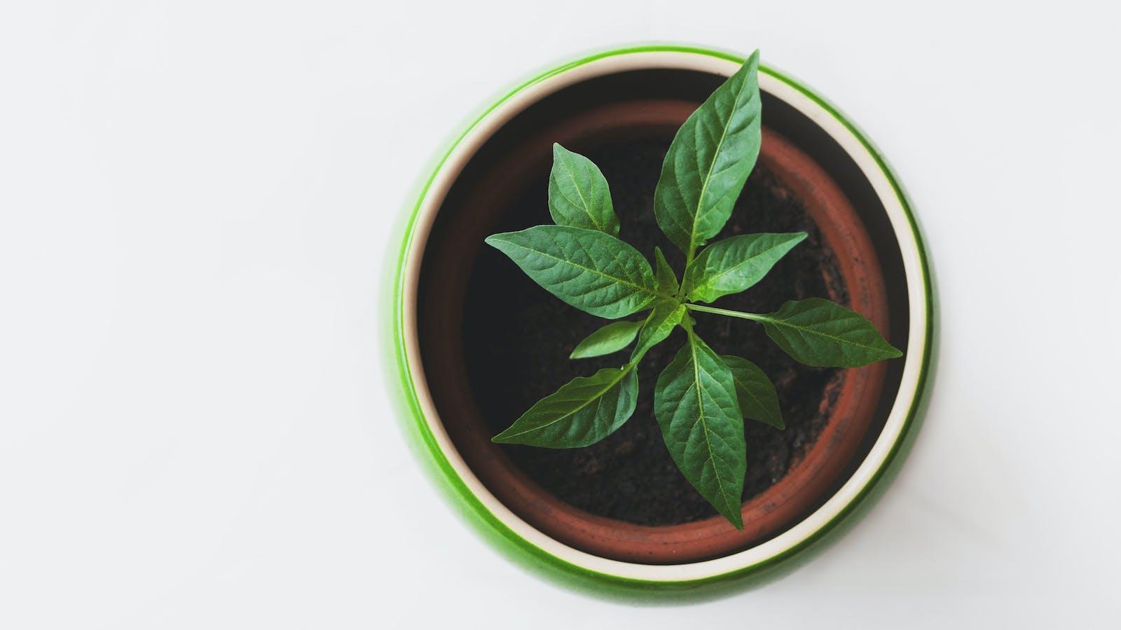 Plante en pot en couleurs