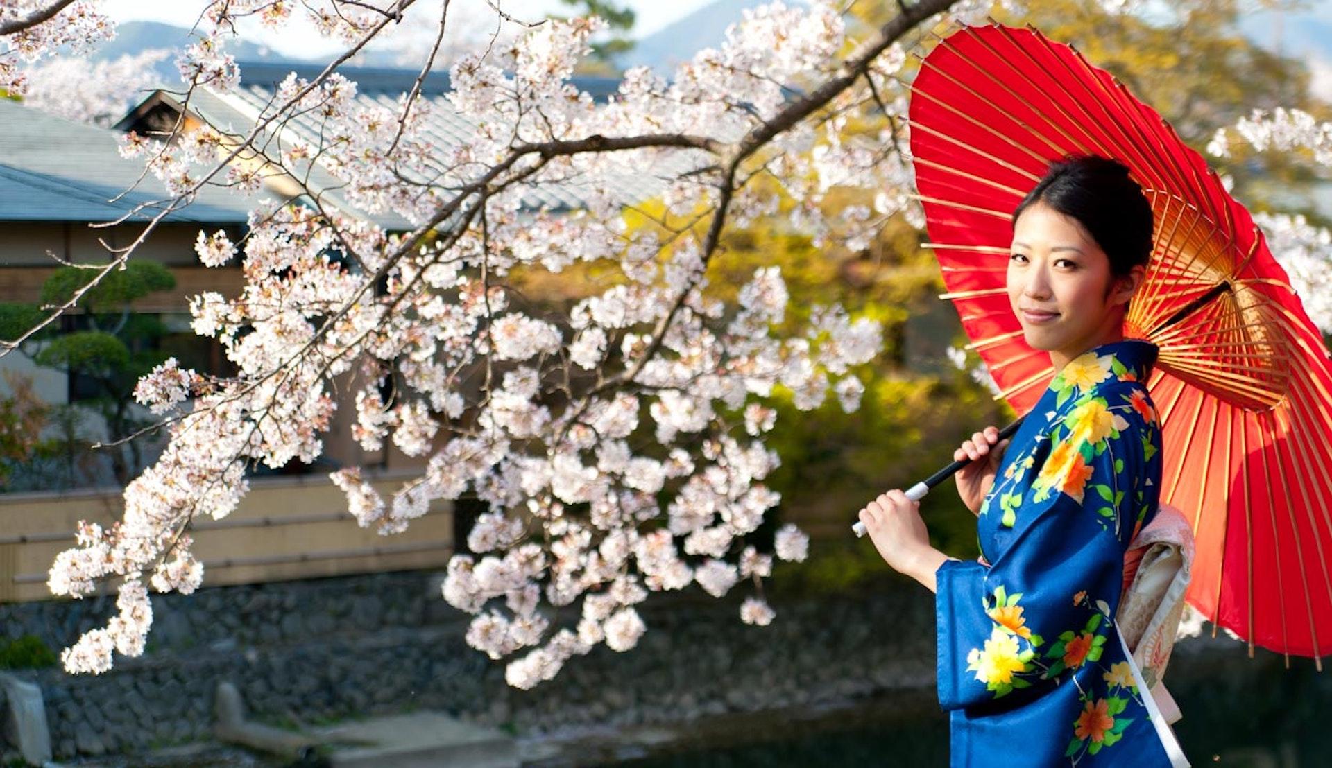 Japansk kvinna med rött paraply vid vacker körsbärsblom.