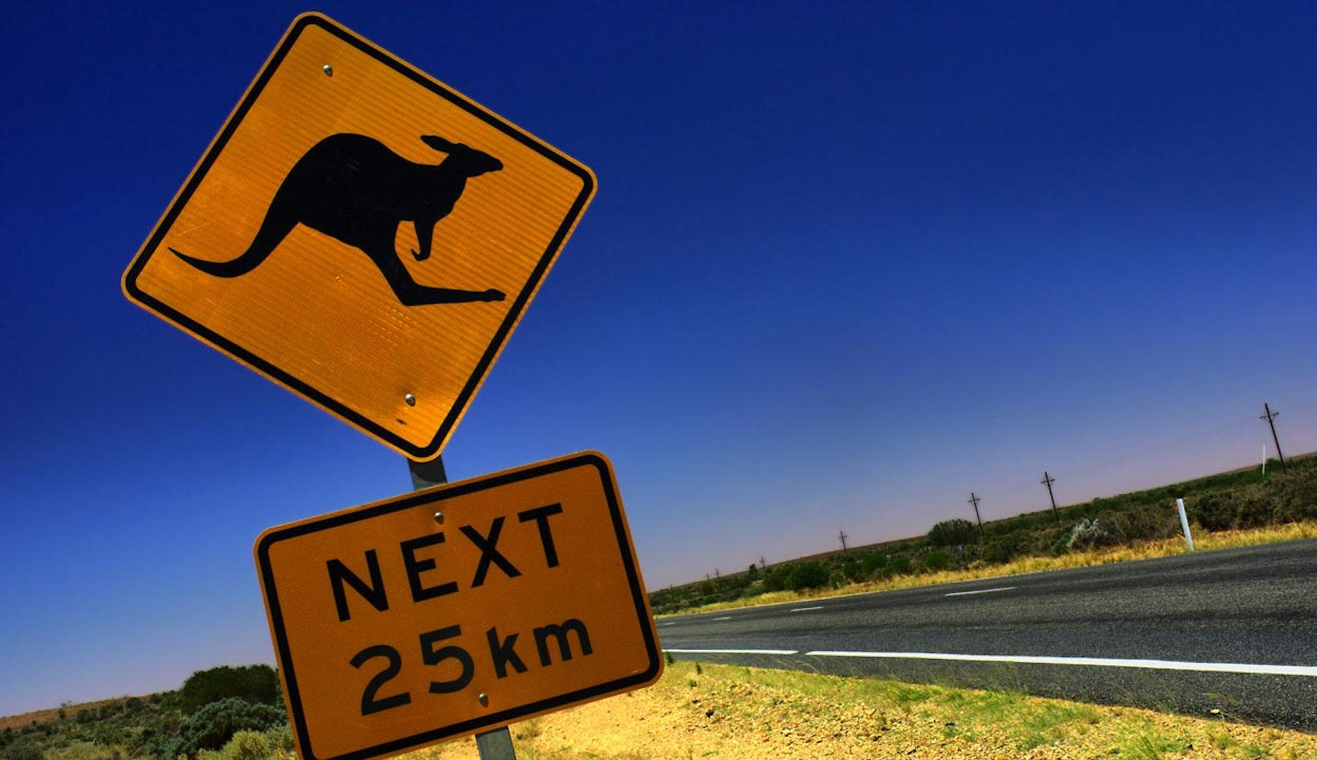 Närbild på trafikskylt i Australien som varnar för kängurur.