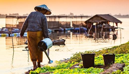 Kvinna vattnar sina grödor vid Mekongfloden.