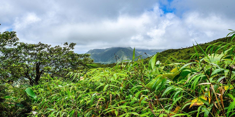 Den högsta toppen på St. Vincent och Grenadinerna - La Soufriere.