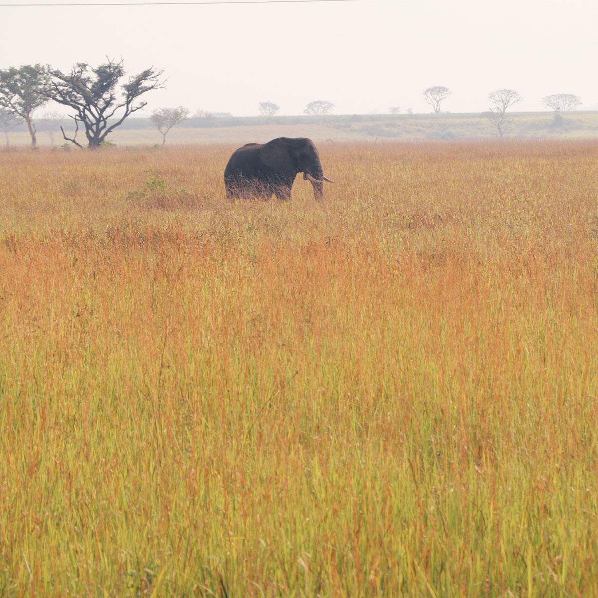Incontri Cougars in Kenya