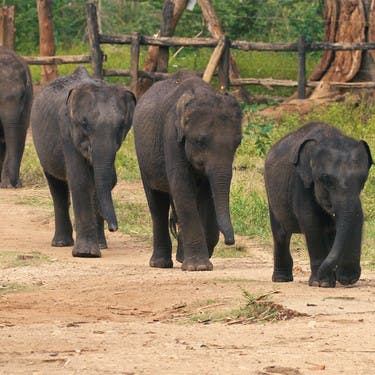 Elephant Orphanage Visit