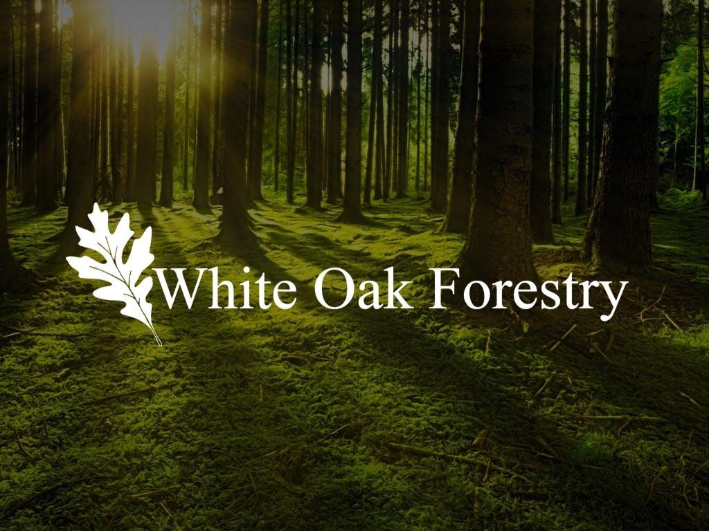 White Oak Forestry