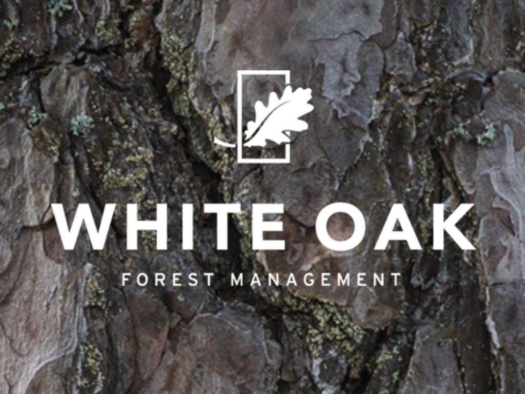 White Oak Forest Management