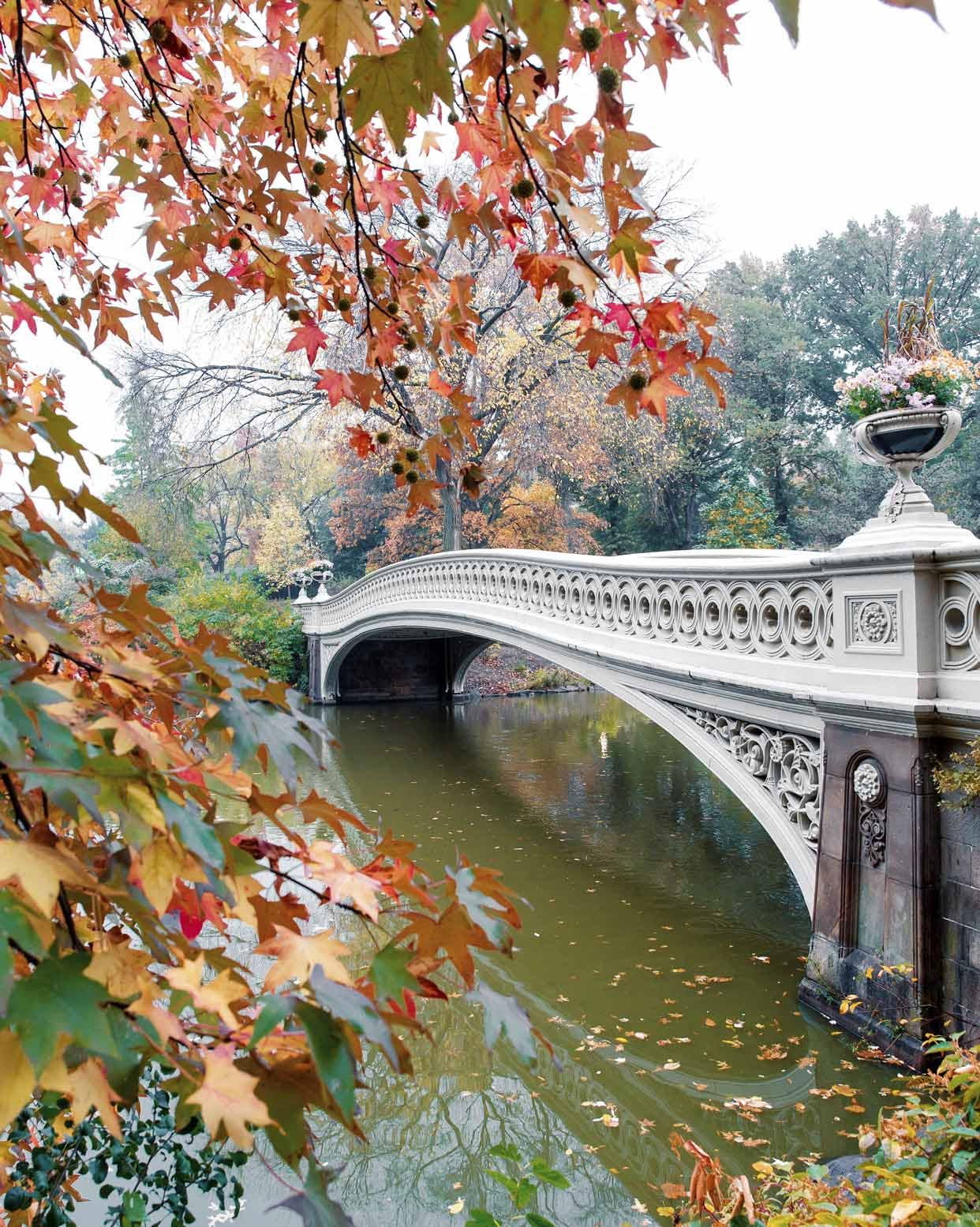 Bow Bridge & The Lake Framed by Nature in Central Park