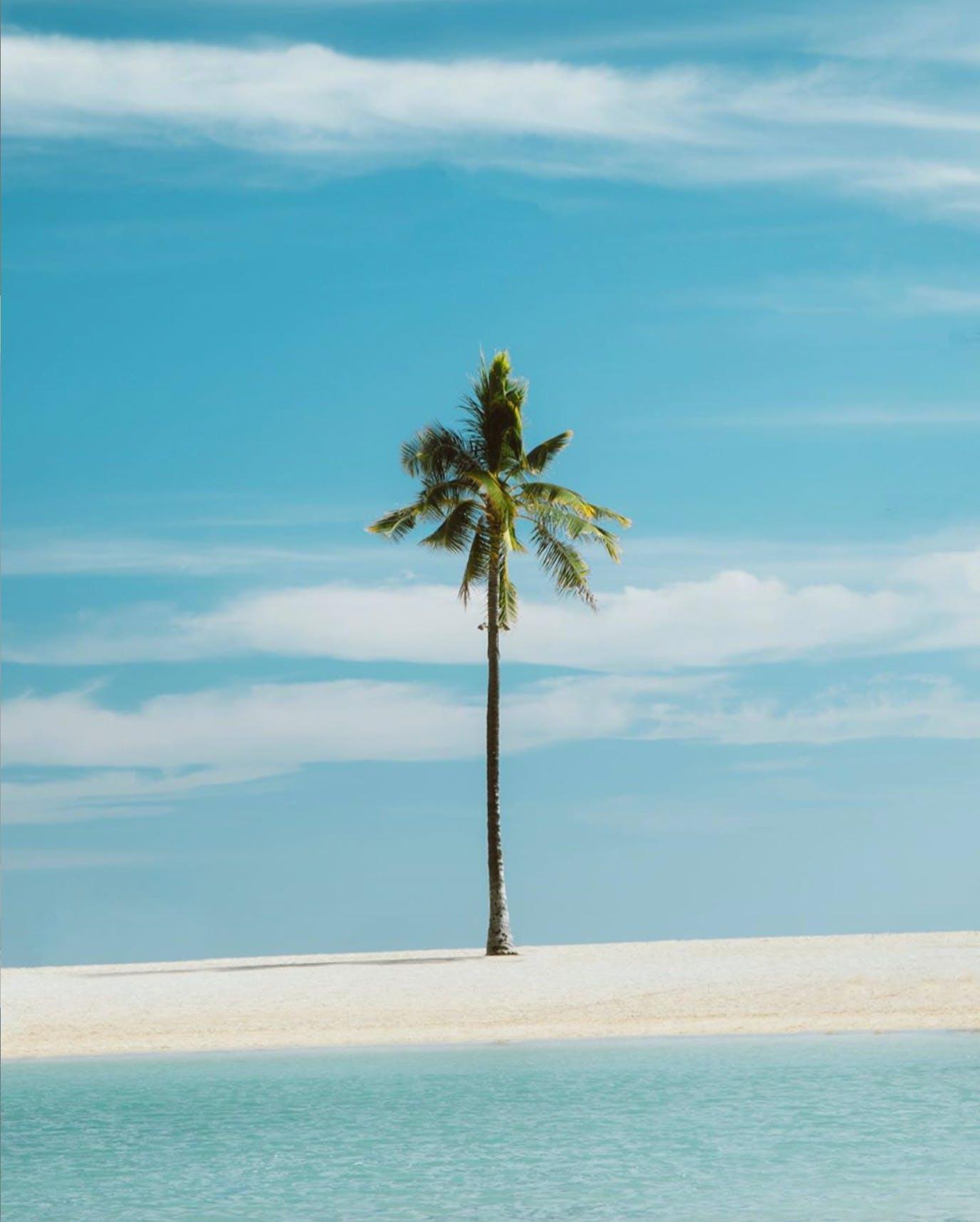 Hilton Lagoon & Palm Tree