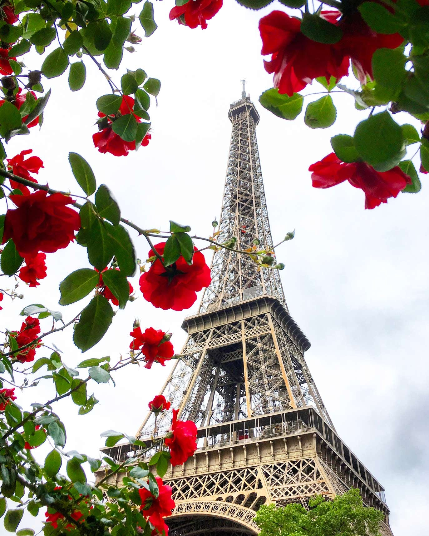 The Eiffel Tower & Red Flowers