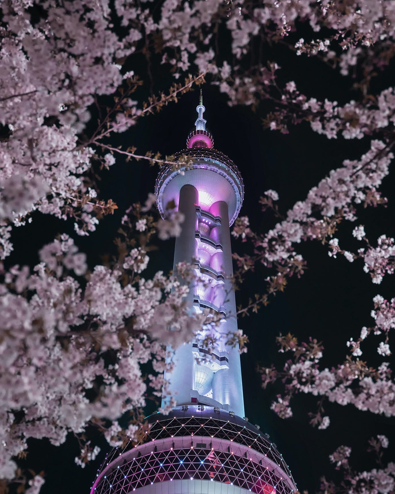 The Oriental Pearl Radio & TV Tower Framed by Cherry Blossoms